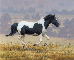 Black and white horse running in countryside