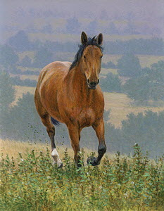 Brown horse running in countryside