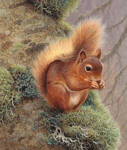 Red squirrel (Sciurus vulgaris) eating nut