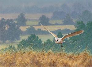Barn owl flying countryside