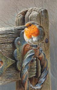 Robin perching on gate