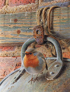 Robin perching on metal bucket