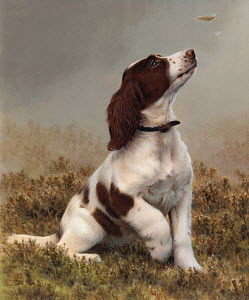 Springer spaniel looking up at feather