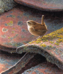 Close up of wren on roof tiles