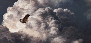 Golden eagle flying in stormy, cloudy sky
