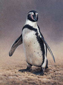 Close up of Humboldt penguin