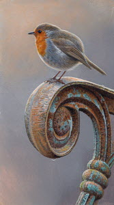 Robin redbreast perched on rusty armrest