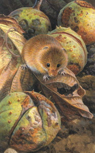 Harvest mouse among autumn leaves and horse chestnut seeds