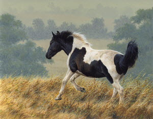 Piebald pony running in countryside