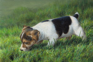 Jack Russell puppy dog waiting by hole in grass