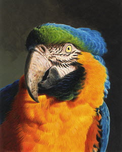 Close up of blue and gold macaw parrot