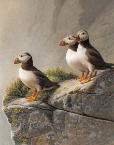 Three puffins standing on rocky cliff