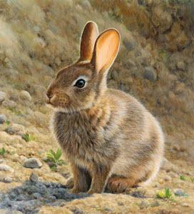 Brown rabbit sitting in sunshine