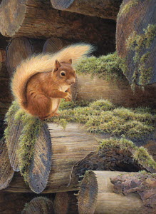 Red squirrel sitting on mossy pile of logs