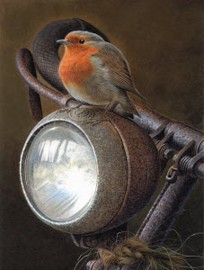 Robin redbreast sitting on handlebars of rusty bike