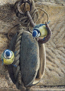 Two blue tits perched on old block and tackle pulley hanging on nail