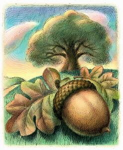 Close up of acorn and oak leaf below oak tree