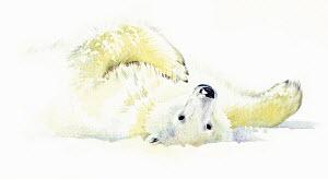 Polar bear laying in snow