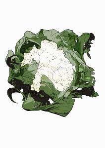 Cauliflower on white background