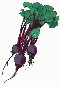 Beets on white background
