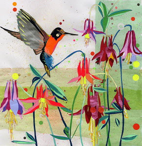 Hummingbird feeding on Columbine (Aguilegia)