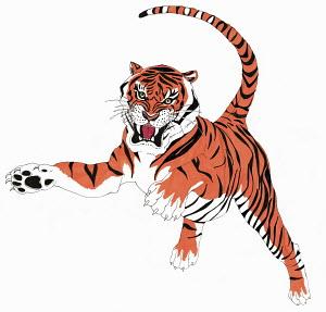Snarling pouncing tiger