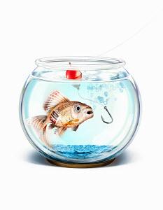 Fish hook trying to catch British pound goldfish in fishbowl