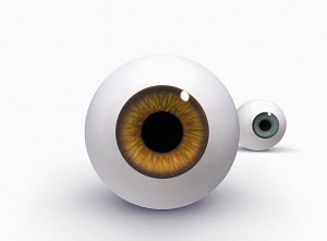 Brown and blue glass eyeballs on white background