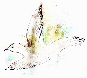 White peace dove flying