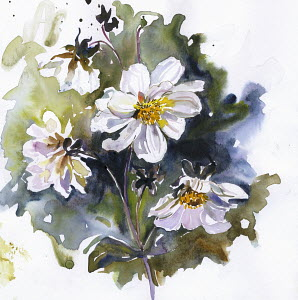 White dahlia flowers on stem