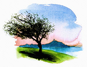 Watercolor painting of Glastonbury Thorn, England