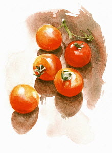 Watercolor painting of fresh tomatoes