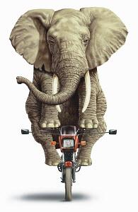 Elephant riding on a motorbike