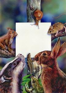 Lots of woodland animals gathered around blank notice board