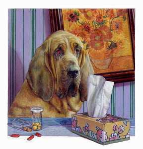 Pills and tissues next to bloodhound dog with a cold