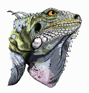 Close up head and shoulders of green iguana