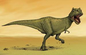 Fierce Tyrannosaurus Rex