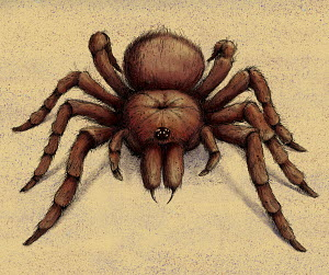 Goliath Birdeater Tarantula spider