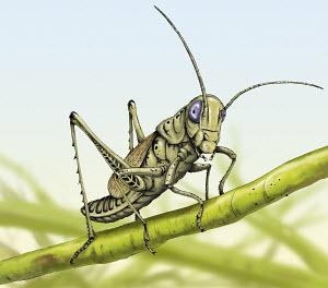 Close up of grasshopper on stem