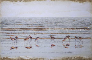 Godwits wading in sea at water's edge