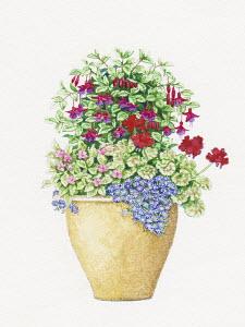 Plant pot with Fuchsia, Pelargonium, Impatiens and Felicia