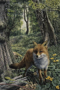 Alert red fox in woodland