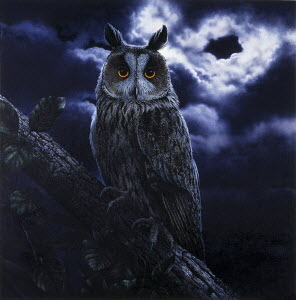 Long-eared owl (Asio Otus) perched on branch at night in moonlight