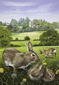 Wild rabbits in dandelion field in countryside