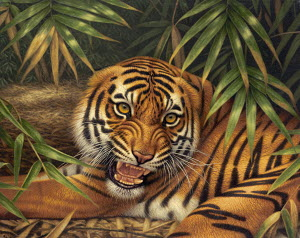 Snarling Bengal tiger lying down on forest floor
