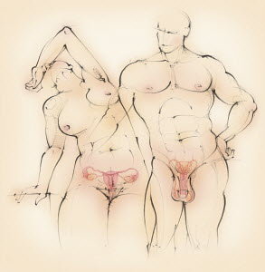 Naked man and woman showing male and female reproductive systems