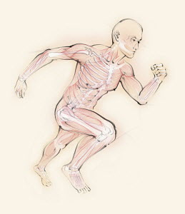 Biomedical illustration of running man showing skeleton and muscles