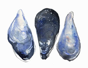 Watercolor painting of three mussels