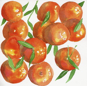 Watercolor painting of satsuma oranges