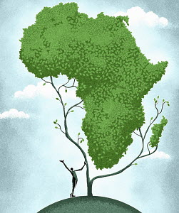 Growing tree in shape of Africa